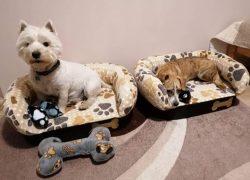 Pajti kutyafekhely és kutyalépcső | Egyedileg gyártott kutyafekhelyek, kutyalépcsők, komfortos kiegészítők széles méret és színválasztékban.